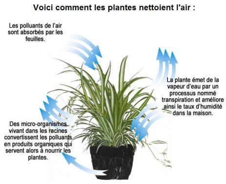 101016200002_schema_comment_les_plantes_depolluent70