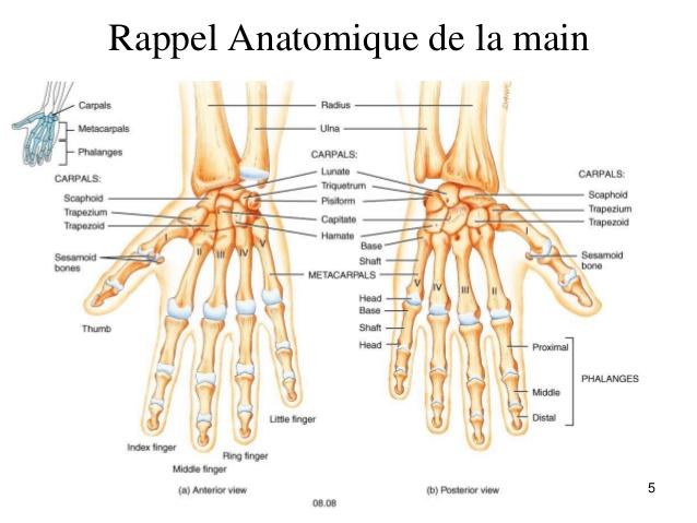 myologie-main-et-poignet-5-638