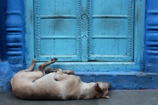 Danae-photographie-Inde-Blue-92